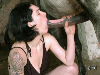 Sodomiser par un cheval
