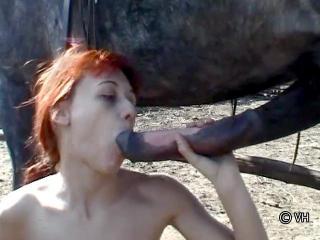 Penis de cheval